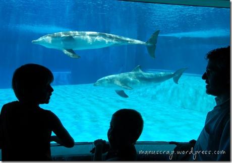 ehi, ci sono i delfiniiiii