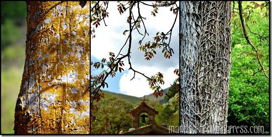 PicMonkey Collage5