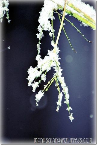 04-DSC_0093